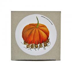Pumpkin jam with walnuts